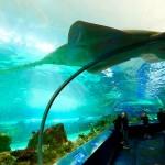 サメの種類 21種全画像付き