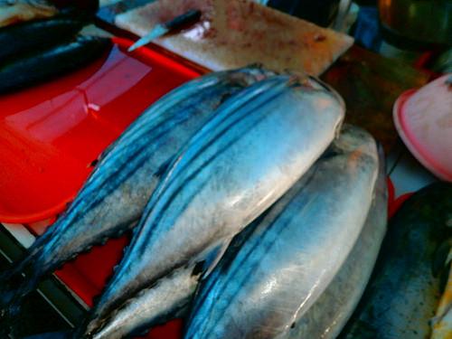 食用魚の種類 カツオの画像