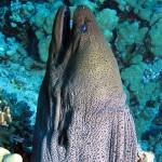 シガテラ毒のある魚の種類