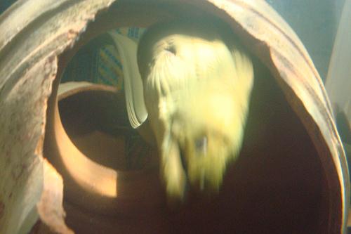 オナガウツボの写真画像