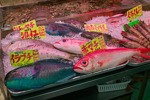 アオブダイ(沖縄 青い魚)の写真画像