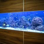 海水水槽 大きさ 魚の数