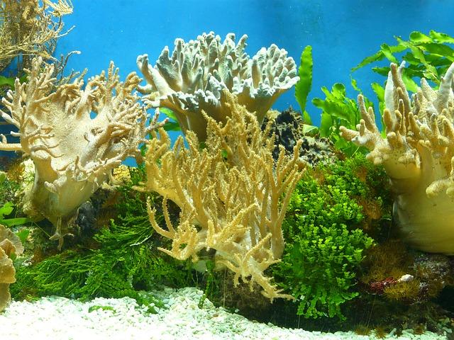 サンゴ海水魚水槽の画像
