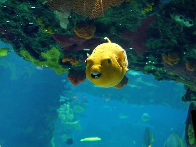 ヒリゾ浜で見れる魚の種類 ミナミハコフグの写真画像