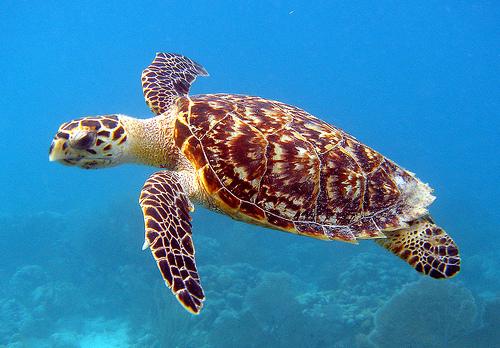 ウミガメの泳ぎ方