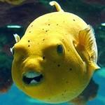 日本の海?ヒリゾ浜 魚の種類
