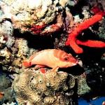 ハタ(ミーバイ)の種類 沖縄の魚