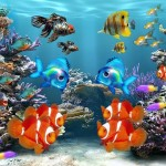 ニモやドリーの魚(熱帯魚)の名前や種類