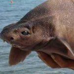 深海サメの種類