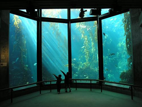 モントレーベイ水族館 館内の写真