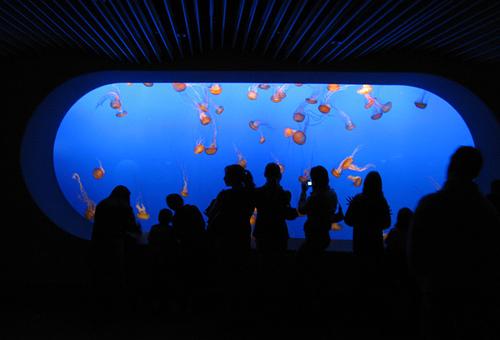 モントレーベイ水族館 館内の写真2