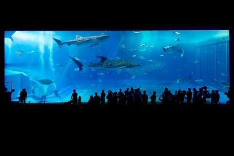 水族館の画像