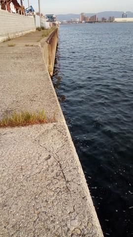 シーバス釣り場 大阪 花市場公園前周辺 堤防3