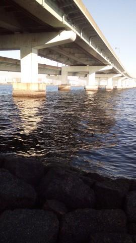 シーバスの釣り場 神戸 甲子園浜 高架下1