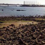シーバスの釣り場 神戸 甲子園浜 ふるさと海岸3