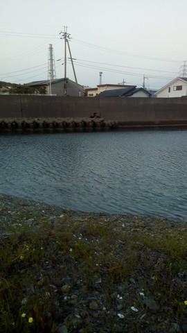 シーバスの釣り場 和歌山 谷川港周辺 東川 (2)