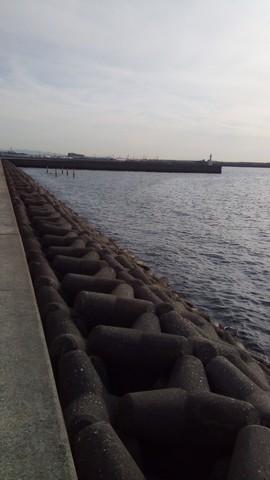 シーバス釣り場 大阪 花市場公園前周辺 整列されたテトラ3