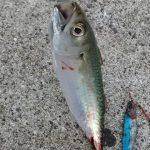 サバ釣り入門 サビキ仕掛けで初心者が釣れるコツ