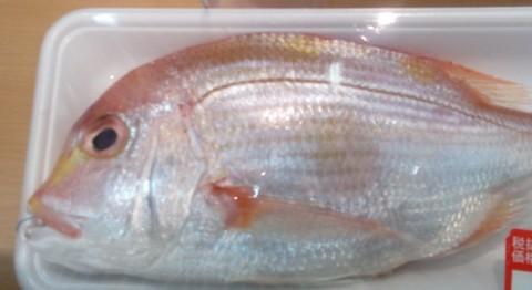 キダイ(蓮子鯛)の画像
