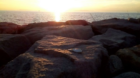 夕日の中のフグの画像