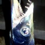 太刀魚 堤防からの釣り方