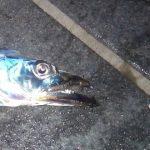 太刀魚 バイブレーションの釣り方入門