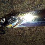 太刀魚 堤防からジグサビキでの釣り方