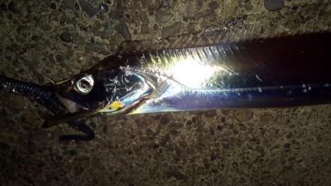 マーズR32で釣った太刀魚