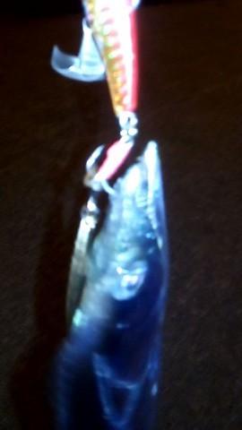 コアマン・パワーブレードで釣った太刀魚2