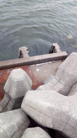 男里川河口 ボラがよく居る排水溝2