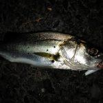 ローリングベイトで釣れない原因と使い方