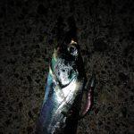 太刀魚 ワーム入門 初心者がただ巻きで釣るコツ