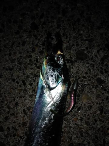 ワーム3インチスイベル付きで釣った太刀魚