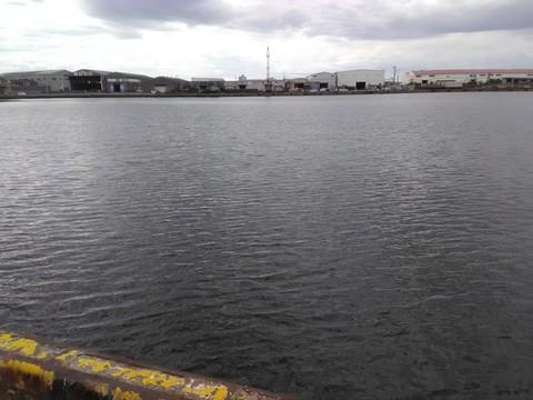 貝塚港 釣り場 全景1