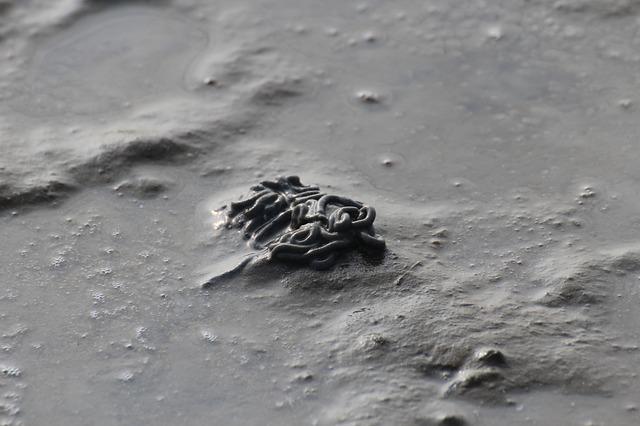 砂の上 ゴカイの画像