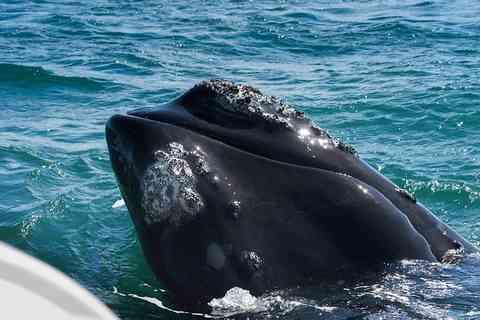 クジラ(鯨)の頭の画像