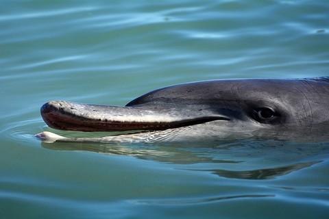 イルカの顔