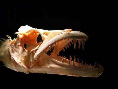 魚の骨 頭