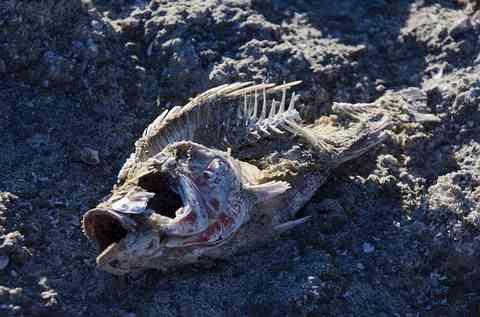 干からびた魚の骨
